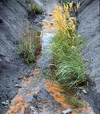 acid mine drainage Poland